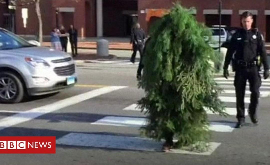 კარანტინის დარღვევისთვის დააკავეს ხის ფორმაში გადაცმული მამაკაცი, რომელიც ქუჩაში დასეირნობდა